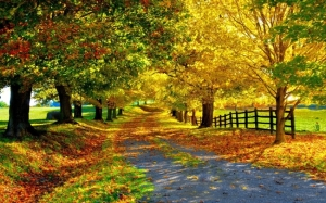 beautiful-autumn_tn2