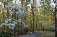 This image has an empty alt attribute; its file name is dogwoods-3664875_640-e1589281142461.jpg